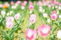 横浜散歩 〜さくらを求めて〜 - Mein Alltagsleben  〜カメラとおでかけ〜