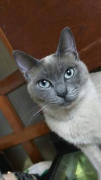 テレビ・・・壊れちゃいました - MINKWIN Cattery &Pretty Aki