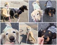 17年3月30日 ポッカポカでひるんぽ♪ - 旅行犬 さくら 桃子 あんず 日記