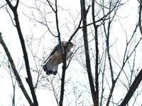 今季初撮り - 鳥撮り日記