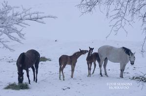 親子の馬たち - ekkoの --- four seasons --- 北海道