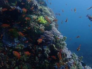 サンゴがやっぱりきれい - 裏庭の猫vol.2
