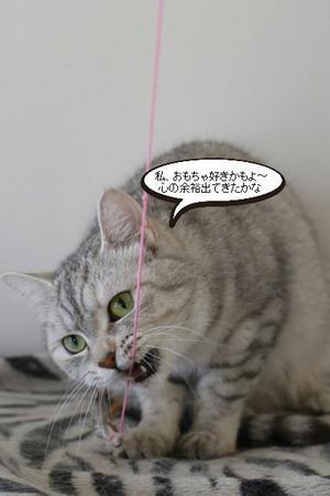 ビビリ猫さん、初めておもちゃで遊ぶ - 保護猫さんのご縁探し