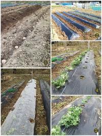 農作業の記録 - ■■ Ainame60 たまたま日記 ■■