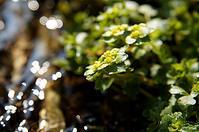 雪解 - 清治の花便り