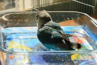 水浴びB.Bの記録 → (オメメがね~、、、・3月29日) - FUNKY'S BLUE SKY
