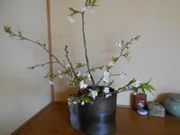 山桜 - 終の棲家のひとりごと♪