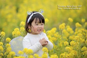 笠岡 菜の花フェスティバル-4 - 気ままな Digital PhotoⅡ