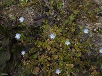 照葉樹林の春を訪ねて - 飛騨山脈の自然