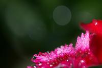 桜の開花を待ちながら、、、 - Change The World