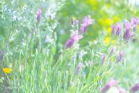 花の色 - *PHOTOMOMIN*