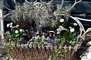 庭の小さな花 - バラ好き夫婦のガーデン日記