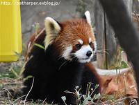 2017年3月 大牟田市動物園 その2 - ハープの徒然草