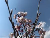 我が家の庭(3月、、、) - ひいぽぽタイムスNO.2
