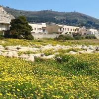 お花畑で羊がランチ中❤️ - La Tavola Siciliana  ~美味しい&幸せなシチリアの食卓~