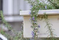 庭の花 - AR75TS