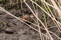 イソヒヨドリ幼鳥とシロハラに - デジタルカメラで遊ぶ 気まぐれ備忘録