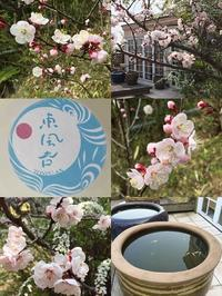 杏の季節 - 水鏡 mizukagami