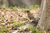 そろそろ‥ - 趣味の野鳥撮影