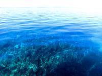 リーフチェック 石垣島 のお知らせ - ブルちゃんのログ