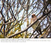 秋ヶ瀬公園・子供の森 2017.3.25 - 鳥撮り遊び
