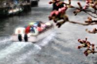 傘の花・sacra - 夢・ファンダンゴ