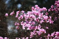 春の森をぱとろーる。 - 万願寺通信