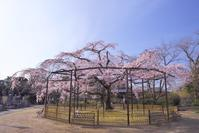 妙行寺 - Patrappi annex