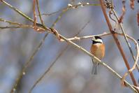 森の小鳥たち、たくさん - Bird-Watching Journal