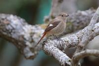 冬から春へ徐々に変化 - 野鳥写真日記 自分用アーカイブズ