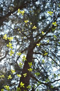 葉っぱ撮り - お花びより