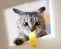 寄り目のリッちゃん - 猫と夕焼け