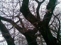 桜の季節は復活した、朝霞 - RÖUTE・G DRIVE AFTER DEATH