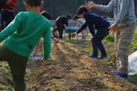 農業体験について - 良え畝のブログ