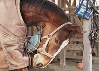 263鞍目 地雷 - 美味しい時間と馬と犬