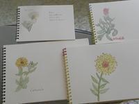 私は、植物、ハーブで健康、肌をコントロールしています - 心とカラダが元気になるアロマ&ハーブ・ガーデン教室chant rose