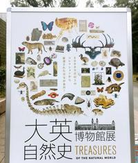 始祖鳥が舞う☆大英自然史博物館展!! - グラフィックデザインとイラストレーション☆YukaSuzukiのブログ