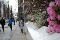 寒い春 - aco* mode