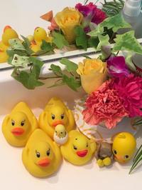yellow birds - miyabine's フォト日記2~身の周りのきれい・可愛い・面白い~