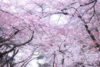 あたらしい、春に - Monologue
