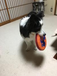 フリスビー - 犬とお散歩