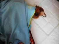 朝の犬まとめて - うまうまひんひん