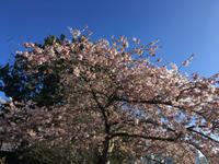 バンクーバーの桜 - Prairie Life