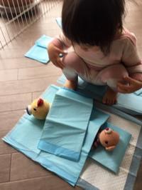 カゴ屋のアオちゃん1才6ヶ月 - あけびのあ