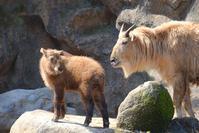 フクちゃんとメイちゃん - 動物園に嵌り中
