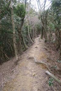早春山歩き  ~多度山にて - すずめtoめばるtoナマケモノ