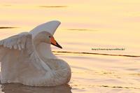 白無垢の白鳥さんで新たな月スタート - イチガンの花道