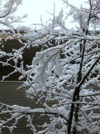 4月は雪でスタート*** - ぴきょログ~軽井沢でぐーたら生活~