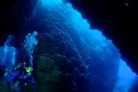 外洋と大島海峡ダイビング 奄美大島 - 奄美大島 ダイビングライフ    ☆アクアダイブコホロ☆