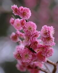 敷島公園で木の花を - 星の小父さまフォトつづり